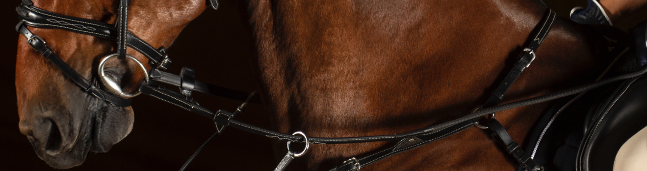 Leather bridles and martingales